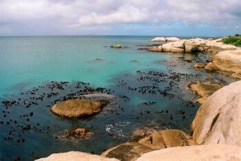 Dive site at Penguin Point, Boulders, Simon\'s Town, Cape Town