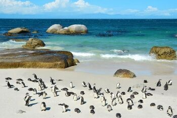 Boulders Beach, Simon\'s Town, Cape Town